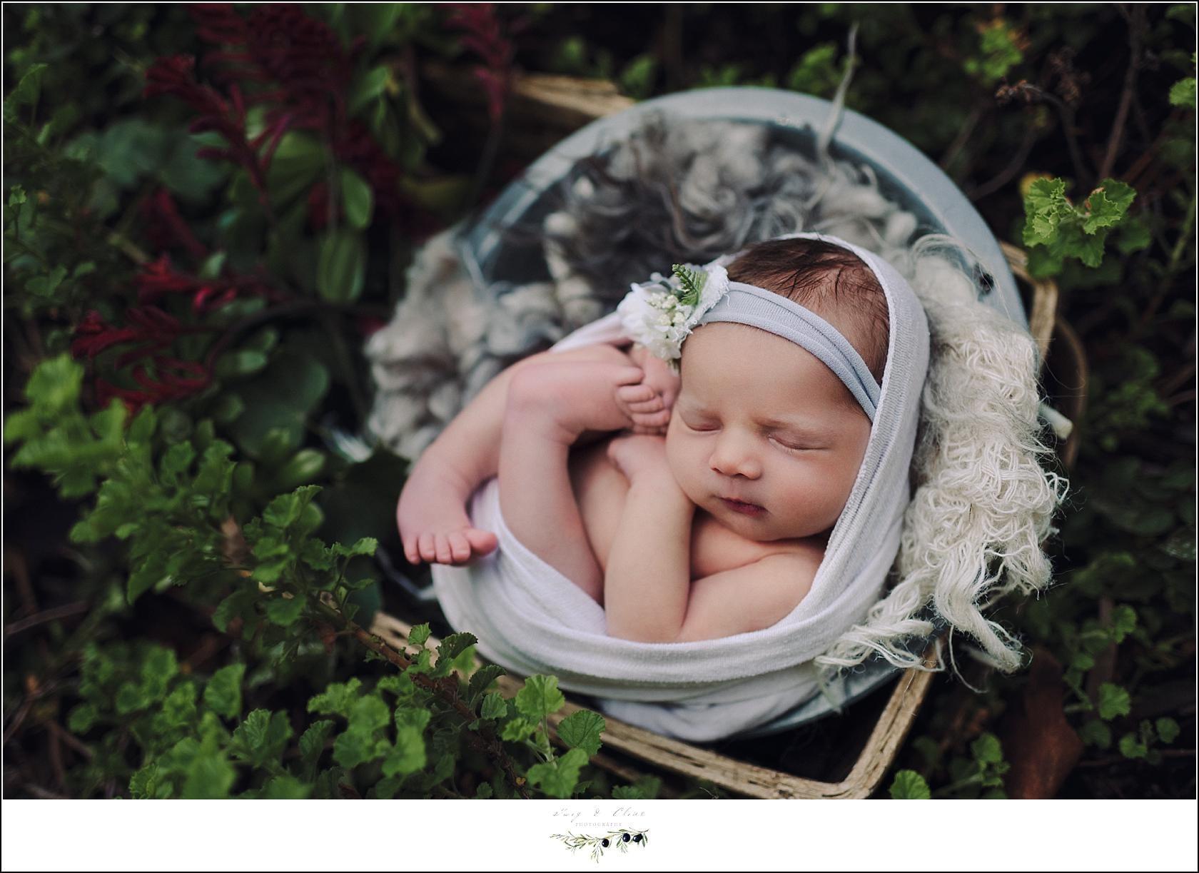 succulent newborn shoot